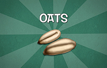 Agriculture and Agri-food Canada - Oats